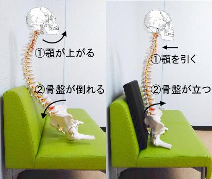 顎を上げると骨盤が倒れる。顎を引くと骨盤が立つ。