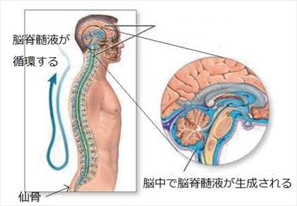 脳脊髄液の生成と循環