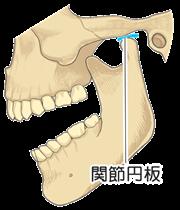 顎関節と関節円盤
