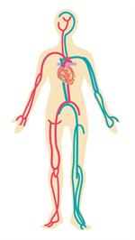 血管は動脈と静脈の2種類
